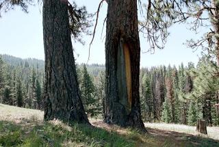 indian-peel-tree204275